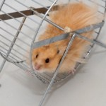 Going Nowhere Fast in Hamster Wheel Relationships